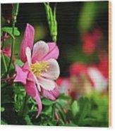 Vivid Pink Columbine Wood Print