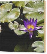Vivid Purple Water Lilly Wood Print