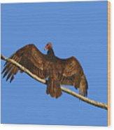 Vivid Vulture .png Wood Print