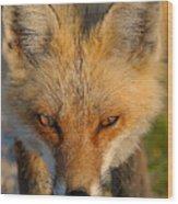 Vixen Wood Print by William Jobes