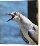 Vocal Sea Gull Wood Print