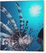 Volitan Lionfish Wood Print by Steve Rosenberg - Printscapes