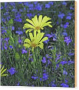 Voltage Yellow And Electric Blue 06 Wood Print