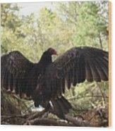 Vulture 429 Wood Print
