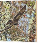 Vulture Glide Wood Print