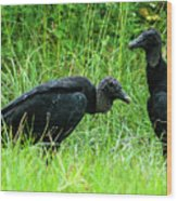Vulture Pair Wood Print