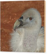 Vulture Portrait Wood Print