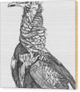 Vulture Sketch Wood Print