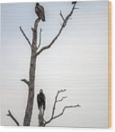 Vultures Perched In A Dead Tree Wood Print