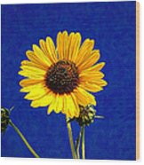 Wabi-sabi Sunflower Wood Print
