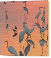 Wading Birds Forage In Colorful Sunset Wood Print