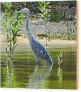 Wading Blue Heron Wood Print