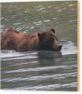 Wading Brown Bear Wood Print
