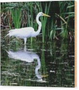 Wading For Food Wood Print