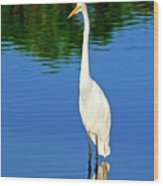 Wading Great White Egret Wood Print