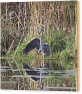 Wading In Heron Wood Print by Cathy  Beharriell