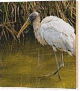 Wading Wood Stork Wood Print
