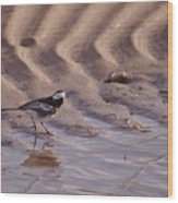 Wagtail On West Sands Wood Print
