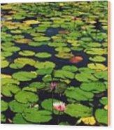 Wailea Water Lilies Wood Print