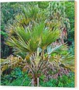 Waimea Palm Study 2 Wood Print