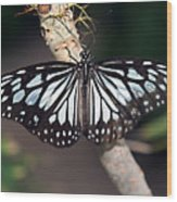 Waiting --- Rice Paper Butterfly Wood Print