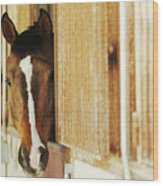Waiting For A Ride Wood Print