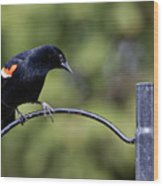 Waiting For Suet Wood Print