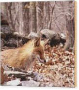Waiting Fox Wood Print