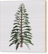 Walchia Tree Wood Print
