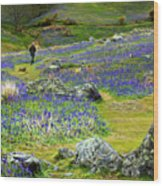 Walk Among The Bluebells Wood Print