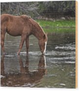 Walk Horse In Salt River Wood Print