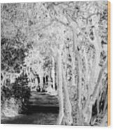 Walk In The Dark Wood Print by Dana Patterson