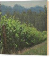 Walk In The Vineyard Wood Print