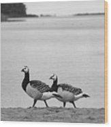 Walk On The Beach. Barnacle Goose Wood Print
