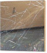Walkin In A Spider Web Wood Print
