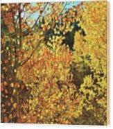 Walking Among The Aspens At Dillon Reservoir Wood Print