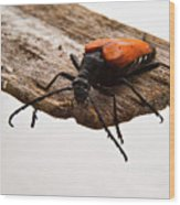 Walking Beetle Wood Print