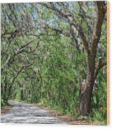 Walking In The Woods Of Amelia Island Wood Print