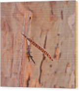 Walking Stick And Pheasant Feather Wood Print