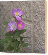 Wall Flower - Wild Rose Wood Print