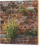 Wall Flowers Wood Print