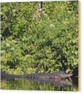 Wall Of Green And Gator Wood Print
