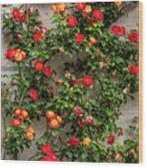 Wall Of Roses Wood Print
