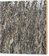 Wall Of Weeds - 2 Wood Print