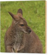 Wallaby Wood Print