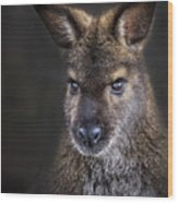 Wallaby Portrait Wood Print