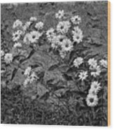 Wallflower Ain't So Bad Bw Wood Print