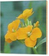 Wallflower Orange Wood Print