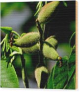 Walnut Buds Wood Print