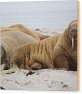 Walrus Family Wood Print